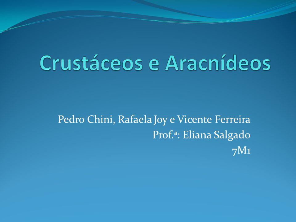 Crustáceos e Aracnídeos Filo: Aracnídeos: Artrópodes Filo: Crustáceos: Artrópodes O que quer dizer Crustáceos.