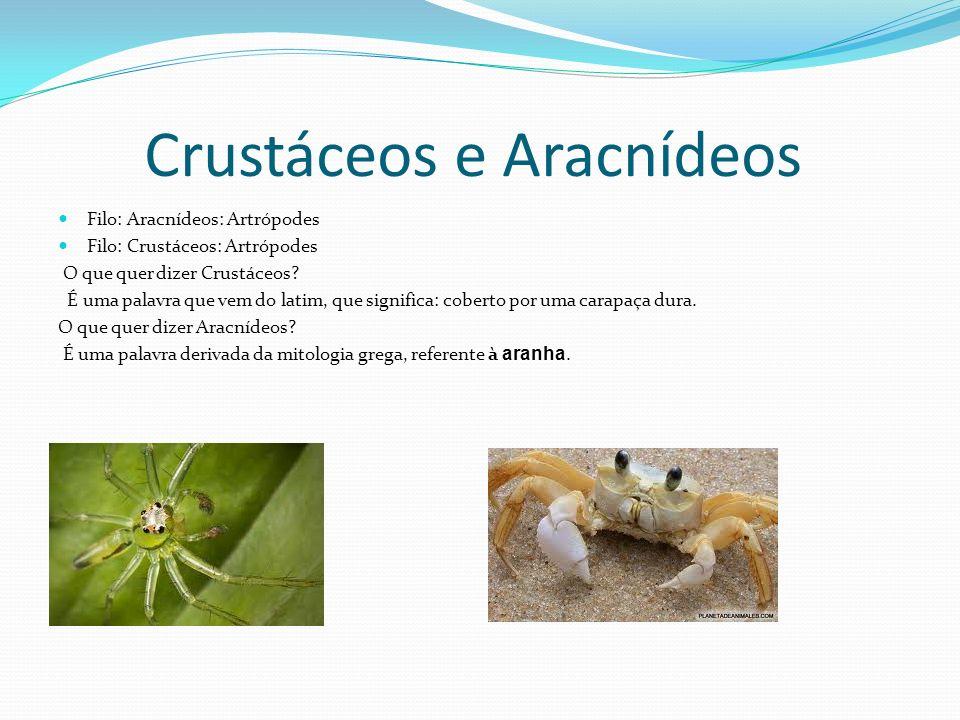 Relação com o ser humano Tipo de alimentação Relação com o ambiente Relação com o ser humano: Crustáceos: a carne de certos crustáceos é muito apreciada como alimento humano.