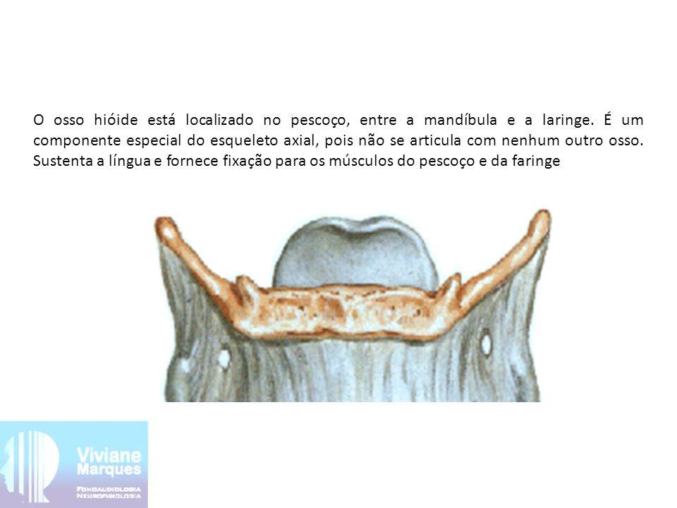 O osso hióide está localizado no pescoço, entre a mandíbula e a laringe.