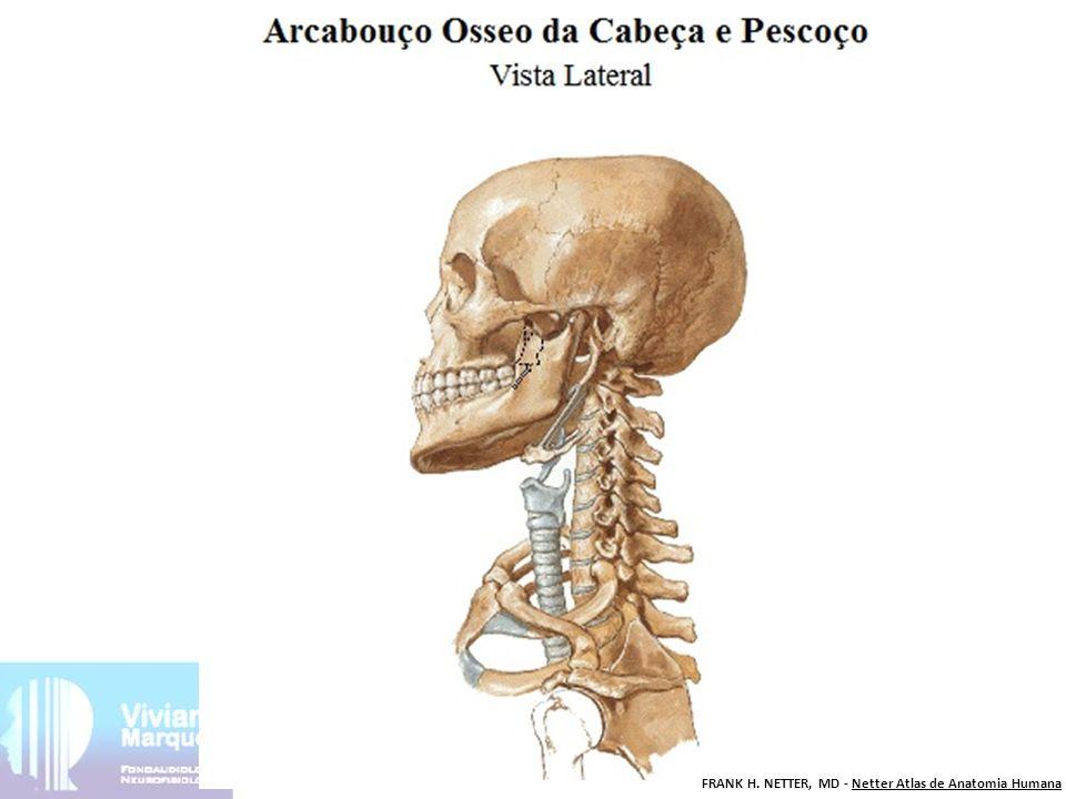 O crânio pode ser dividido em duas partes: (1) O crânio, propriamente dito, ou neurocrânio, que aloja e protege o encefálo e consiste de oito ossos; (2) O esqueleto da face ou crânio visceral, composto de quatorze ossos.