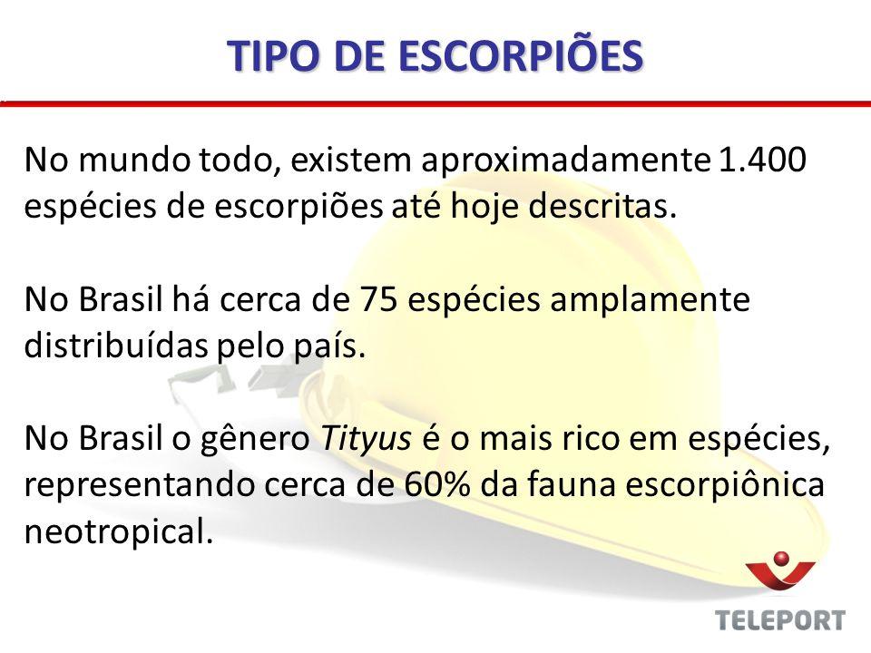 TIPO DE ESCORPIÕES No mundo todo, existem aproximadamente 1.400 espécies de escorpiões até hoje descritas. No Brasil há cerca de 75 espécies amplament