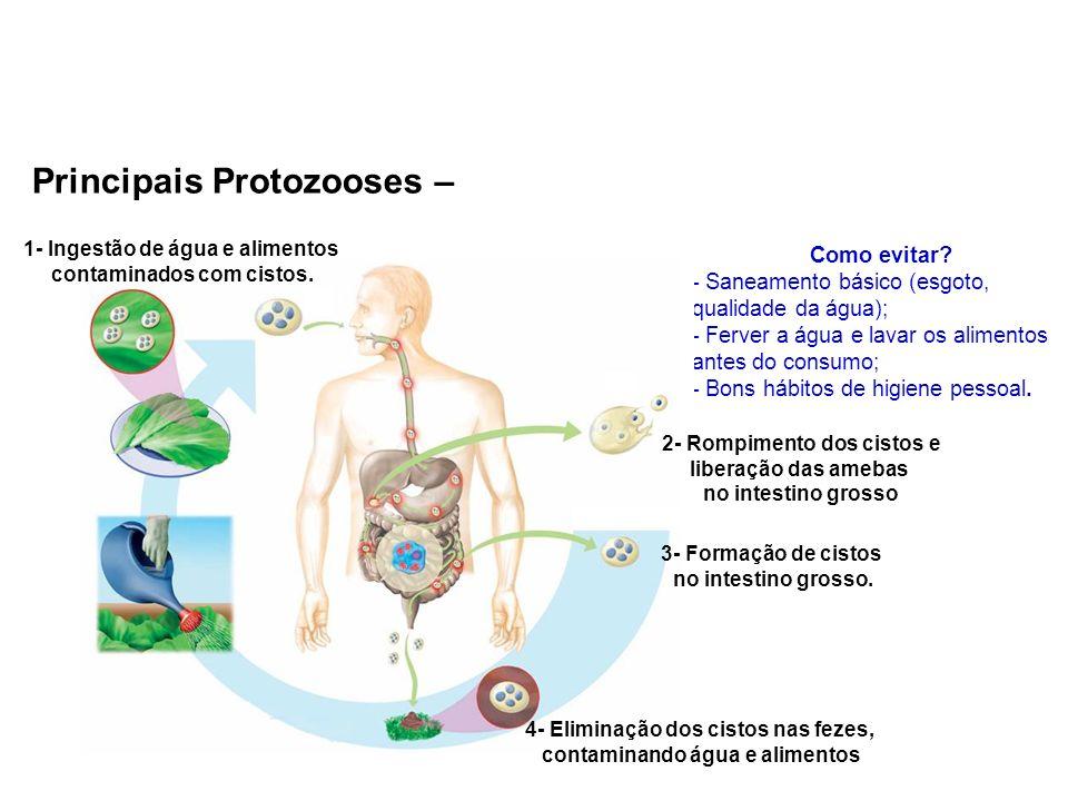 Principais Protozooses – Amebíase (causador: Entamoeba histolytica) Como evitar? - Saneamento básico (esgoto, qualidade da água); - Ferver a água e la