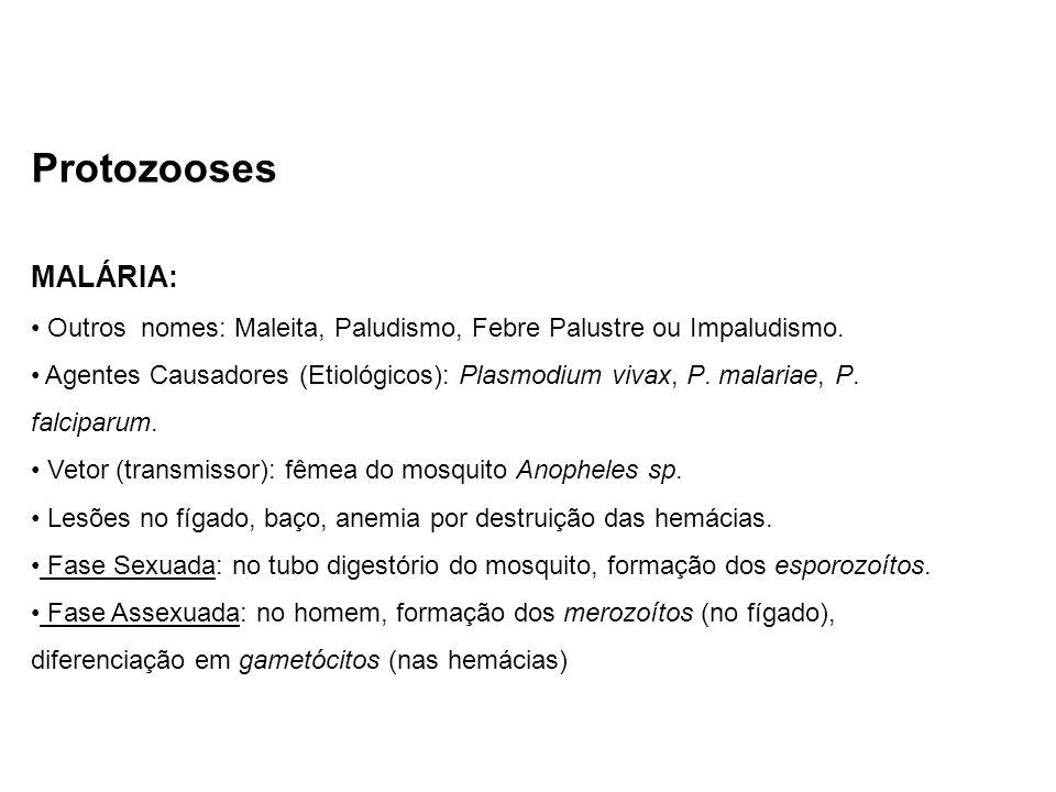 Protozooses MALÁRIA: Outros nomes: Maleita, Paludismo, Febre Palustre ou Impaludismo. Agentes Causadores (Etiológicos): Plasmodium vivax, P. malariae,