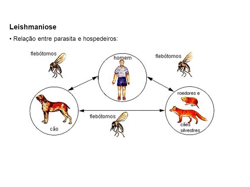 Leishmaniose Relação entre parasita e hospedeiros: