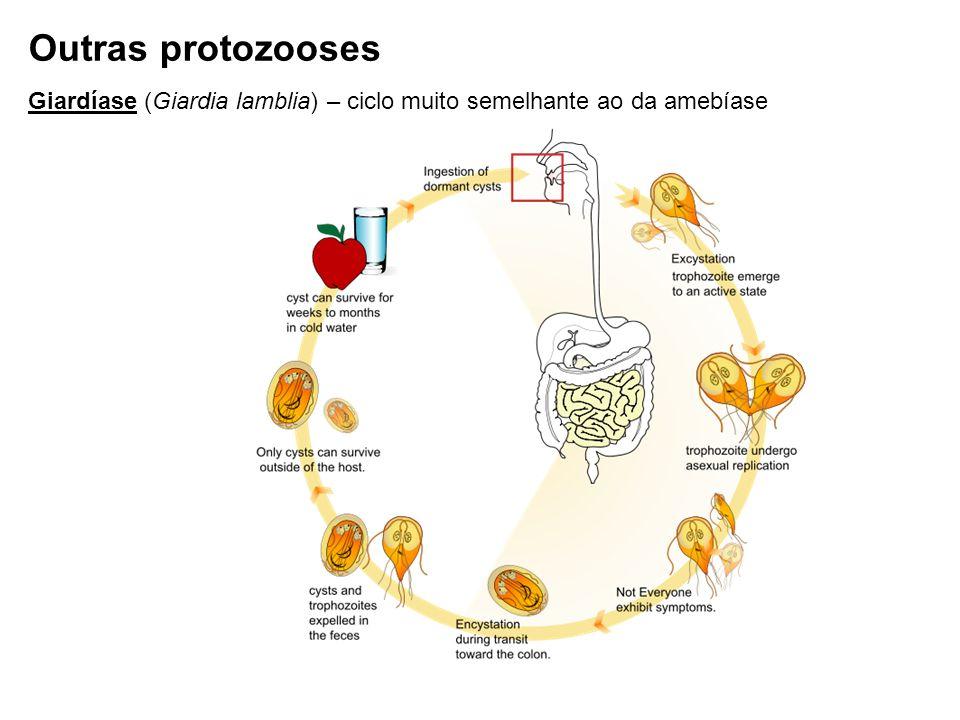 Giardíase (Giardia lamblia) – ciclo muito semelhante ao da amebíase Outras protozooses