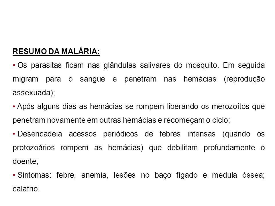 RESUMO DA MALÁRIA: Os parasitas ficam nas glândulas salivares do mosquito. Em seguida migram para o sangue e penetram nas hemácias (reprodução assexua