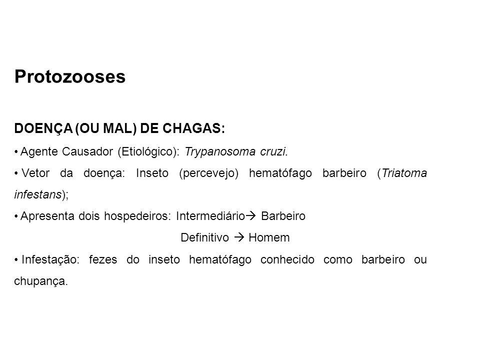 Protozooses DOENÇA (OU MAL) DE CHAGAS: Agente Causador (Etiológico): Trypanosoma cruzi. Vetor da doença: Inseto (percevejo) hematófago barbeiro (Triat
