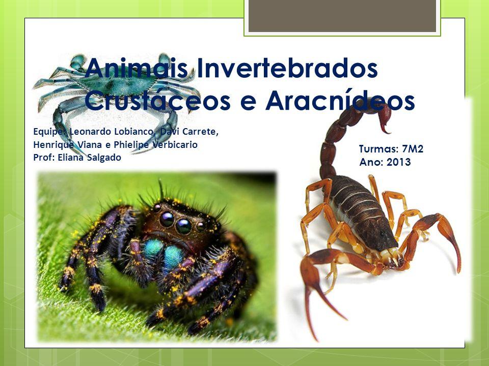 Animais Invertebrados Crustáceos e Aracnídeos Equipe: Leonardo Lobianco, Davi Carrete, Henrique Viana e Phielipe Verbicario Prof: Eliana Salgado Turmas: 7M2 Ano: 2013