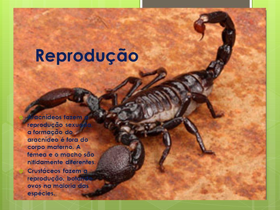 Reprodução Aracnídeos fazem a reprodução sexuada, a formação do aracnídeo é fora do corpo materno.