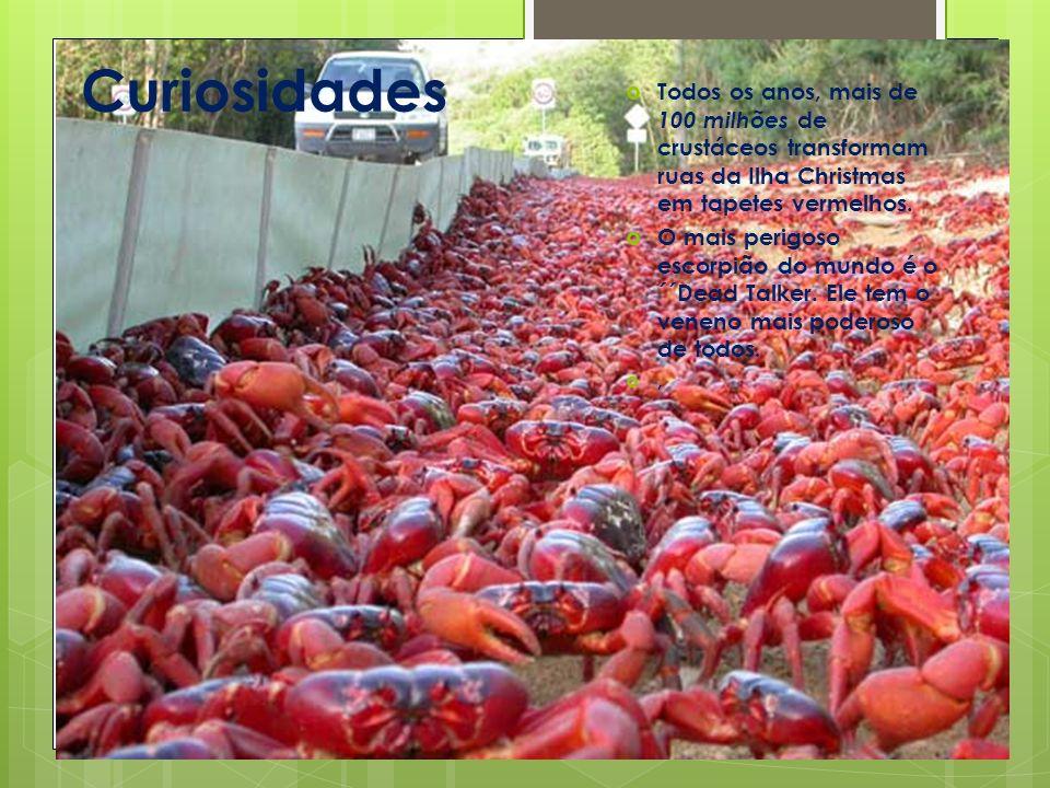 Curiosidades Todos os anos, mais de 100 milhões de crustáceos transformam ruas da Ilha Christmas em tapetes vermelhos.