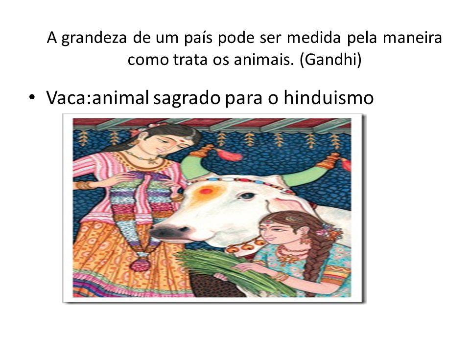 A grandeza de um país pode ser medida pela maneira como trata os animais. (Gandhi) Vaca:animal sagrado para o hinduismo