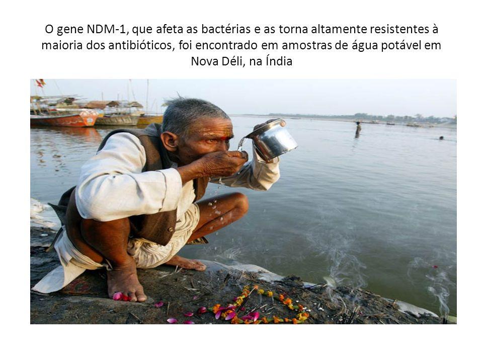O gene NDM-1, que afeta as bactérias e as torna altamente resistentes à maioria dos antibióticos, foi encontrado em amostras de água potável em Nova D