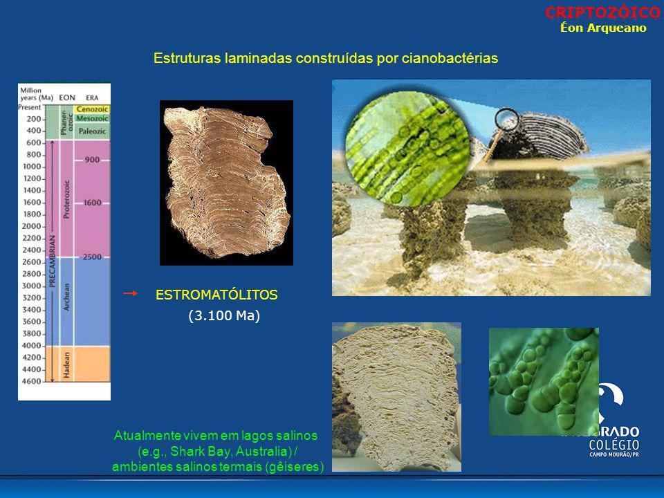 Atualmente vivem em lagos salinos (e.g., Shark Bay, Australia) / ambientes salinos termais (gêiseres) Estruturas laminadas construídas por cianobactér