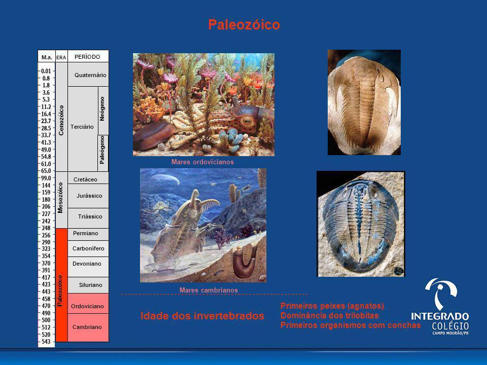 Fanerozóico Cambriano Ordoviciano Siluriano Devoniano Carbonífero Permiano Triássico Jurássico Cretáceo Terciário Quaternário Paleógeno Neógeno Paleoz