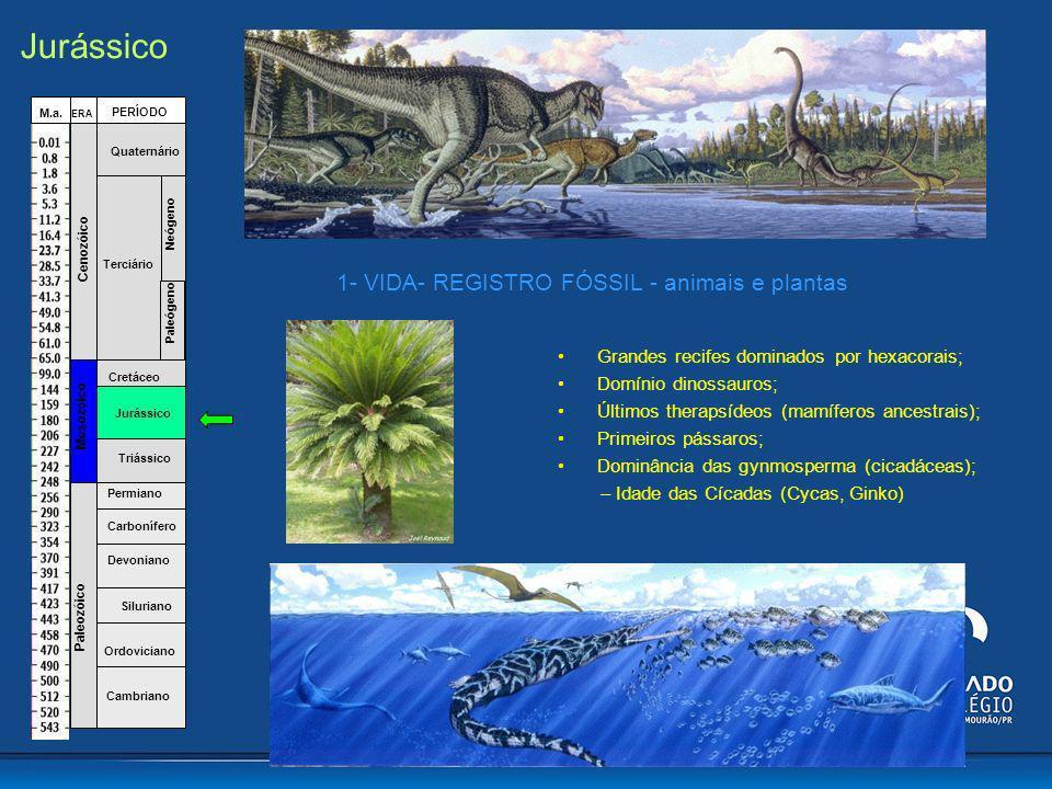 Grandes recifes dominados por hexacorais; Domínio dinossauros; Últimos therapsídeos (mamíferos ancestrais); Primeiros pássaros; Dominância das gynmosp