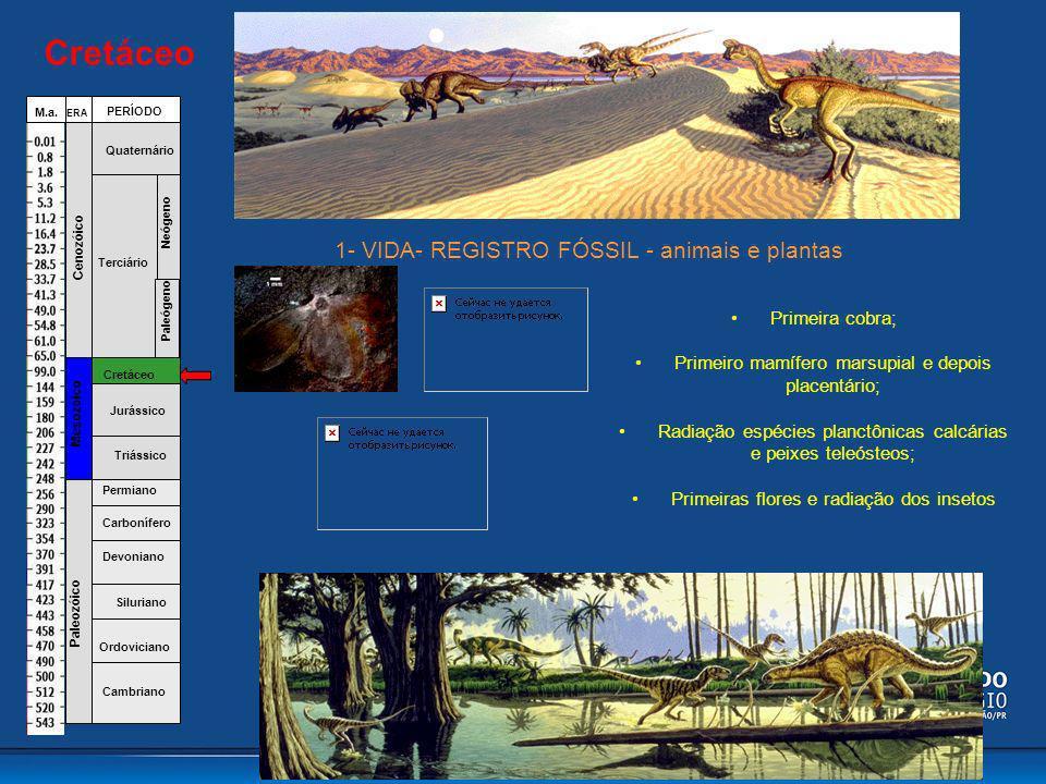 Cretáceo Primeira cobra; Primeiro mamífero marsupial e depois placentário; Radiação espécies planctônicas calcárias e peixes teleósteos; Primeiras flo