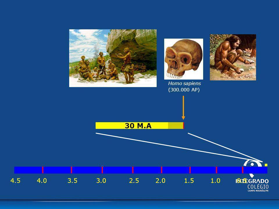 4.54.03.53.02.02.51.01.50.5 30 M.A Homo sapiens (300.000 AP)