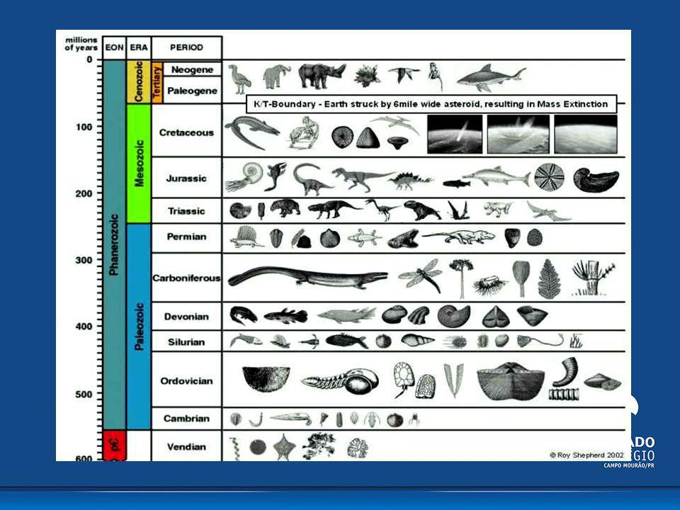 Cambriano Ordoviciano Siluriano Devoniano Carbonífero Permiano Triássico Jurássico Cretáceo Terciário Quaternário Paleógeno Neógeno Fanerozóico Criptozóico Proterozóico Arqueano Paleozóico Mesozóico Cenozóico ÉON ERA PERÍODO M.a.
