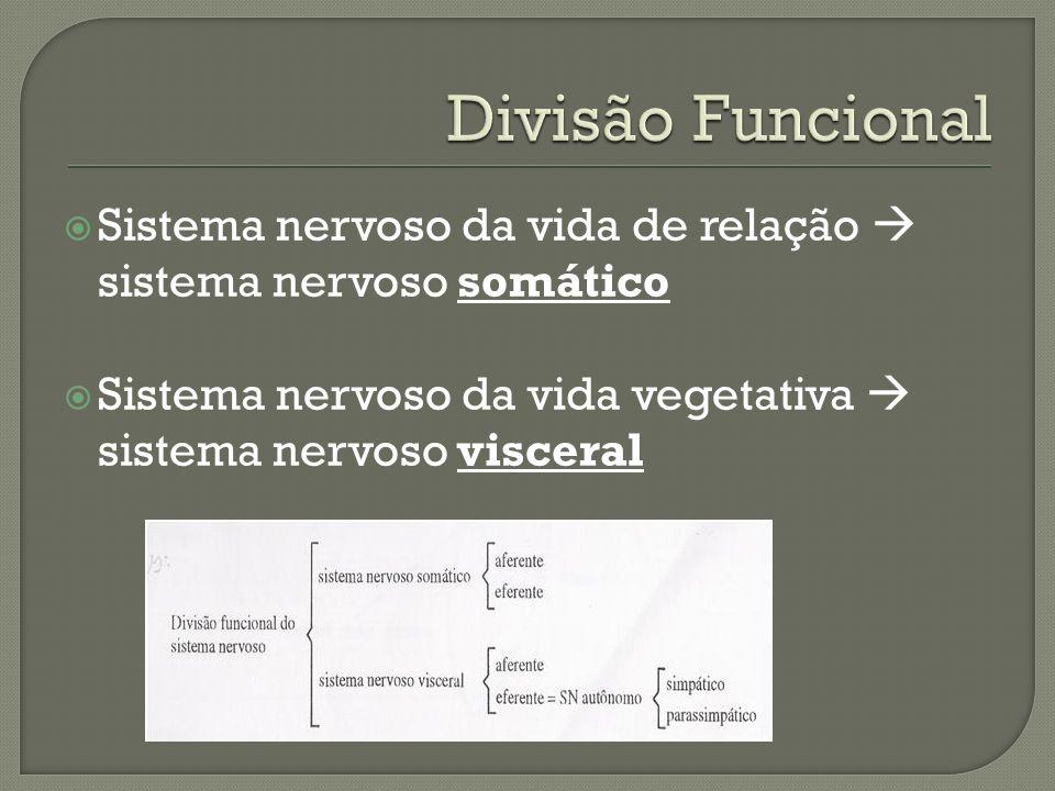 Sistema nervoso da vida de relação sistema nervoso somático Sistema nervoso da vida vegetativa sistema nervoso visceral