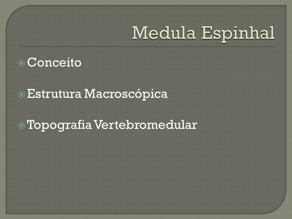 Conceito Estrutura Macroscópica Topografia Vertebromedular