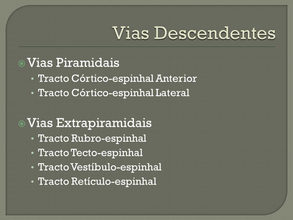 Vias Piramidais Tracto Córtico-espinhal Anterior Tracto Córtico-espinhal Lateral Vias Extrapiramidais Tracto Rubro-espinhal Tracto Tecto-espinhal Trac