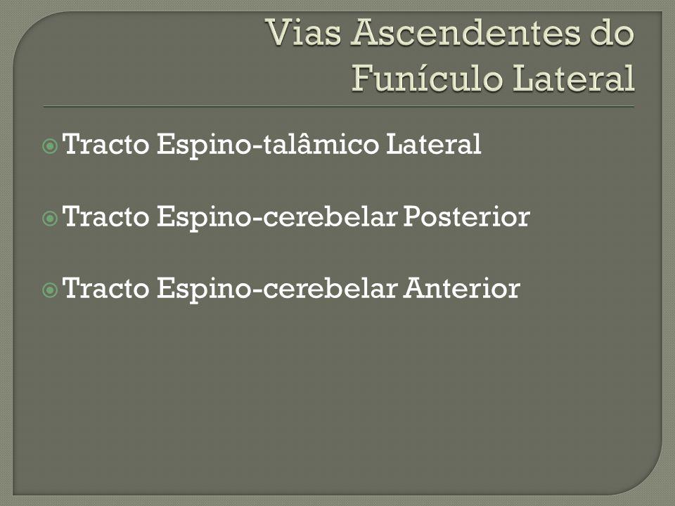 Tracto Espino-talâmico Lateral Tracto Espino-cerebelar Posterior Tracto Espino-cerebelar Anterior