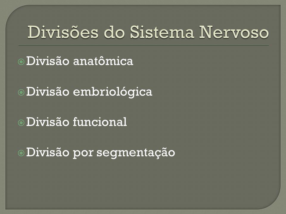 Divisão anatômica Divisão embriológica Divisão funcional Divisão por segmentação