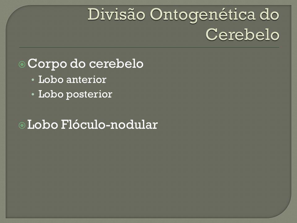 Corpo do cerebelo Lobo anterior Lobo posterior Lobo Flóculo-nodular