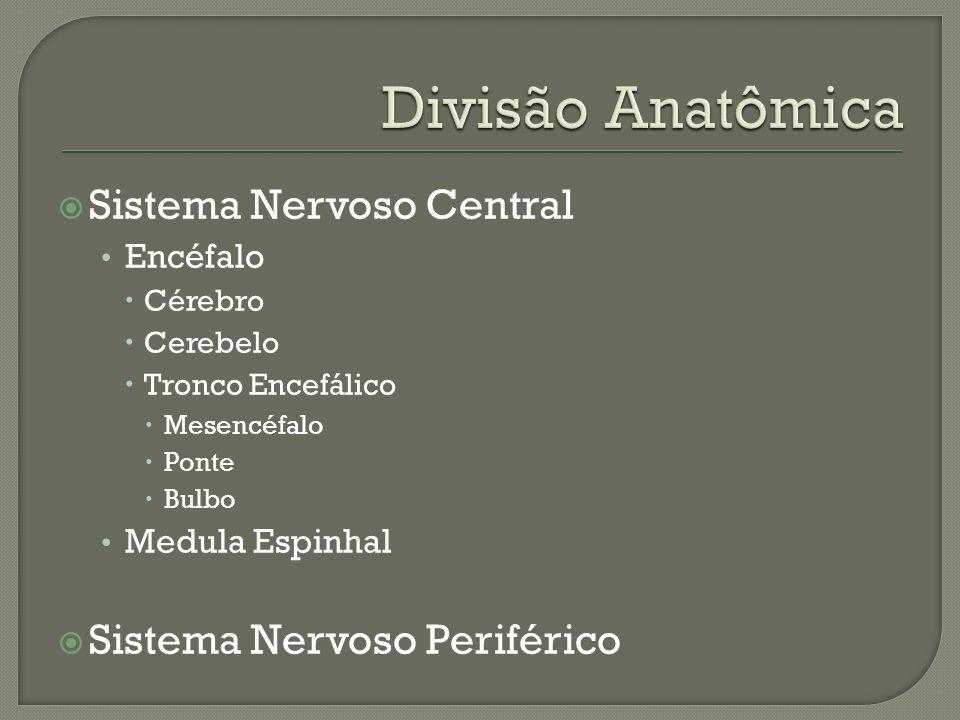 Sistema Nervoso Central Encéfalo Cérebro Cerebelo Tronco Encefálico Mesencéfalo Ponte Bulbo Medula Espinhal Sistema Nervoso Periférico