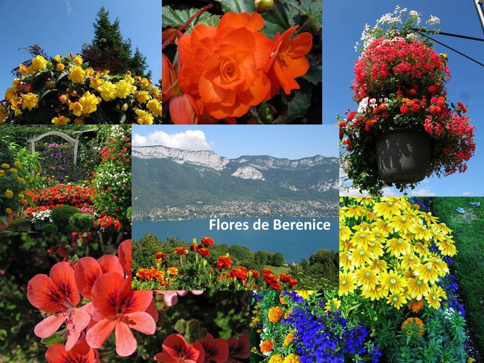 Flores de Berenice