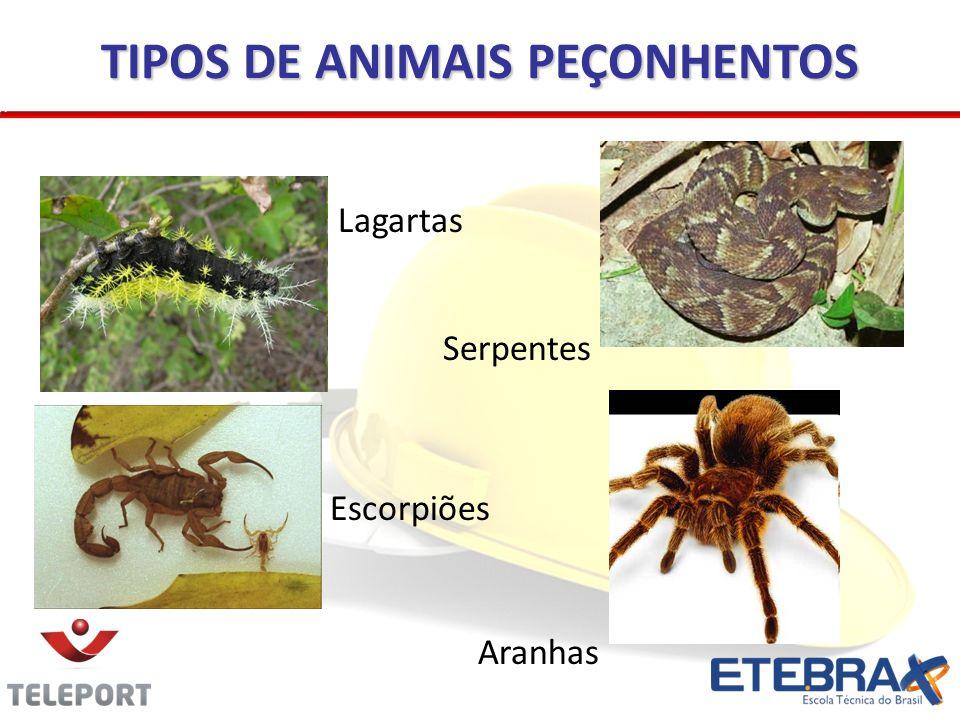 TIPOS DE ANIMAIS PEÇONHENTOS Lagartas Aranhas Escorpiões Serpentes