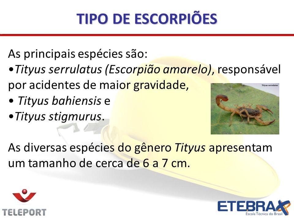TIPO DE ESCORPIÕES As principais espécies são: Tityus serrulatus (Escorpião amarelo), responsável por acidentes de maior gravidade, Tityus bahiensis e