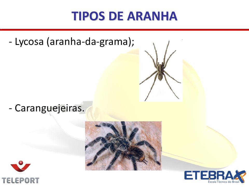 TIPOS DE ARANHA - Lycosa (aranha-da-grama); - Caranguejeiras.