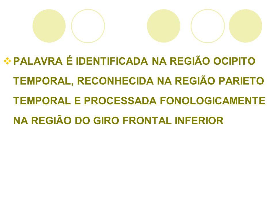 PALAVRA É IDENTIFICADA NA REGIÃO OCIPITO TEMPORAL, RECONHECIDA NA REGIÃO PARIETO TEMPORAL E PROCESSADA FONOLOGICAMENTE NA REGIÃO DO GIRO FRONTAL INFER
