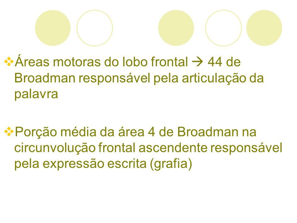 Áreas motoras do lobo frontal 44 de Broadman responsável pela articulação da palavra Porção média da área 4 de Broadman na circunvolução frontal ascen
