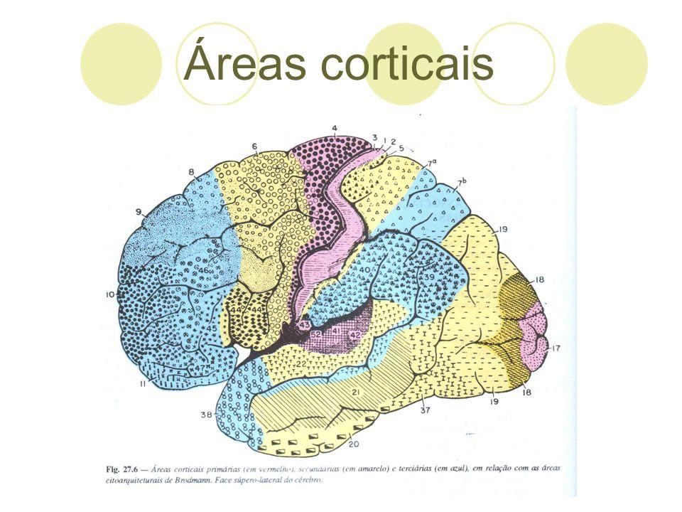 Áreas corticais