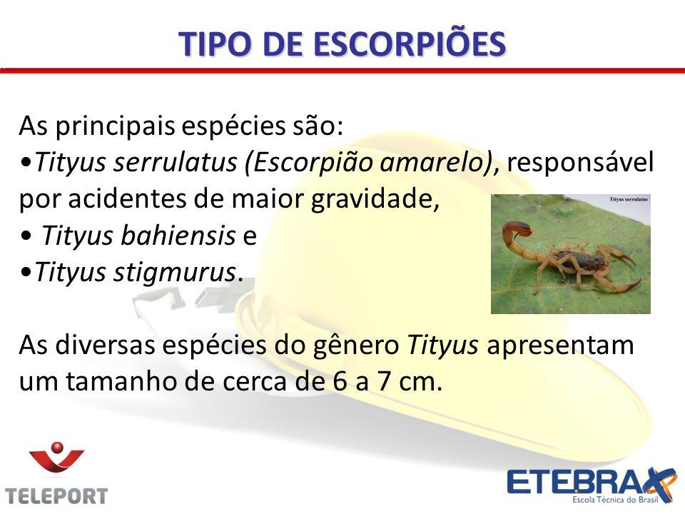 TIPO DE ESCORPIÕES As principais espécies são: Tityus serrulatus (Escorpião amarelo), responsável por acidentes de maior gravidade, Tityus bahiensis e Tityus stigmurus.