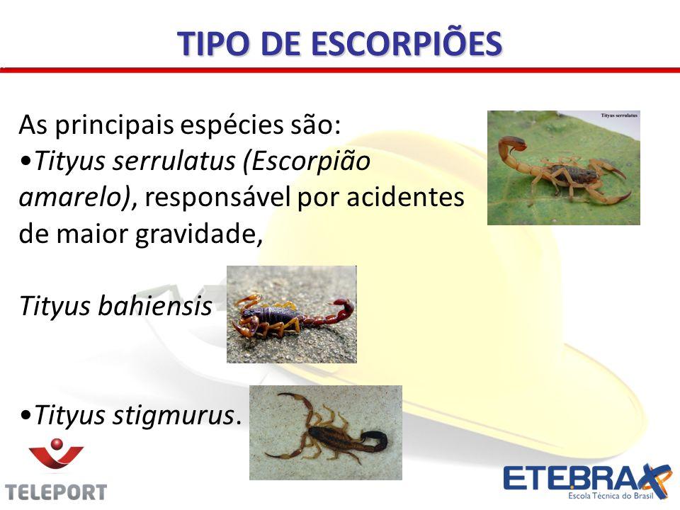TIPO DE ESCORPIÕES As principais espécies são: Tityus serrulatus (Escorpião amarelo), responsável por acidentes de maior gravidade, Tityus bahiensis Tityus stigmurus.