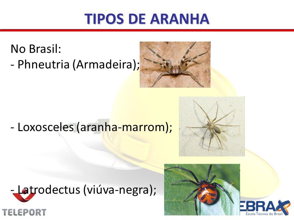 TIPOS DE ARANHA No Brasil: - Phneutria (Armadeira); - Loxosceles (aranha-marrom); - Latrodectus (viúva-negra);