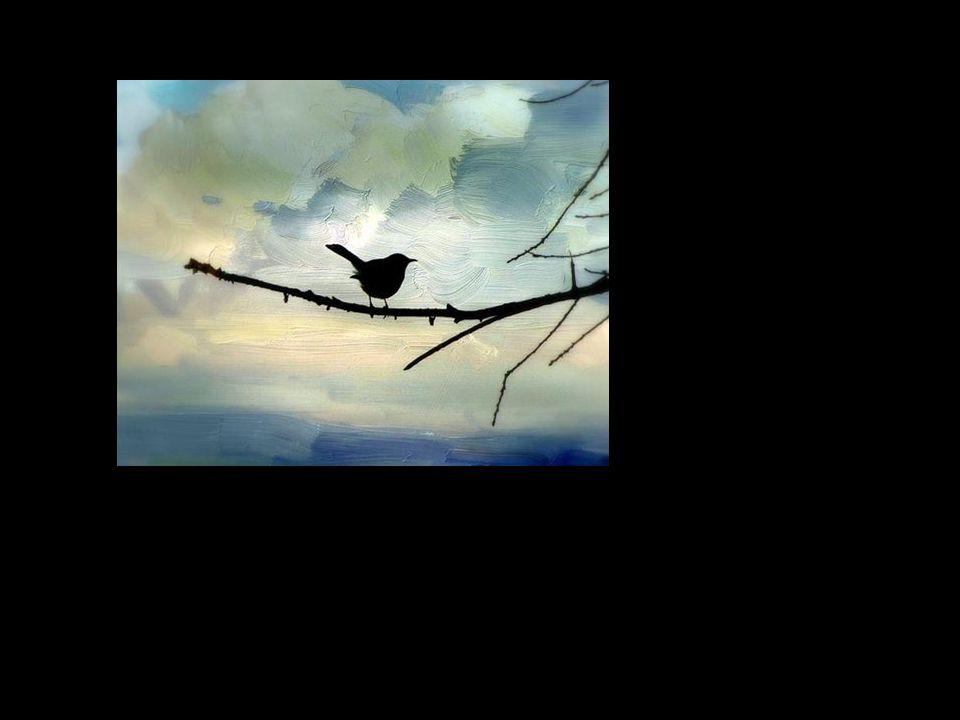 O que levanta vôo? Não será porventura a alma? Tudo passa rapidamente e nós levantamos vôo.