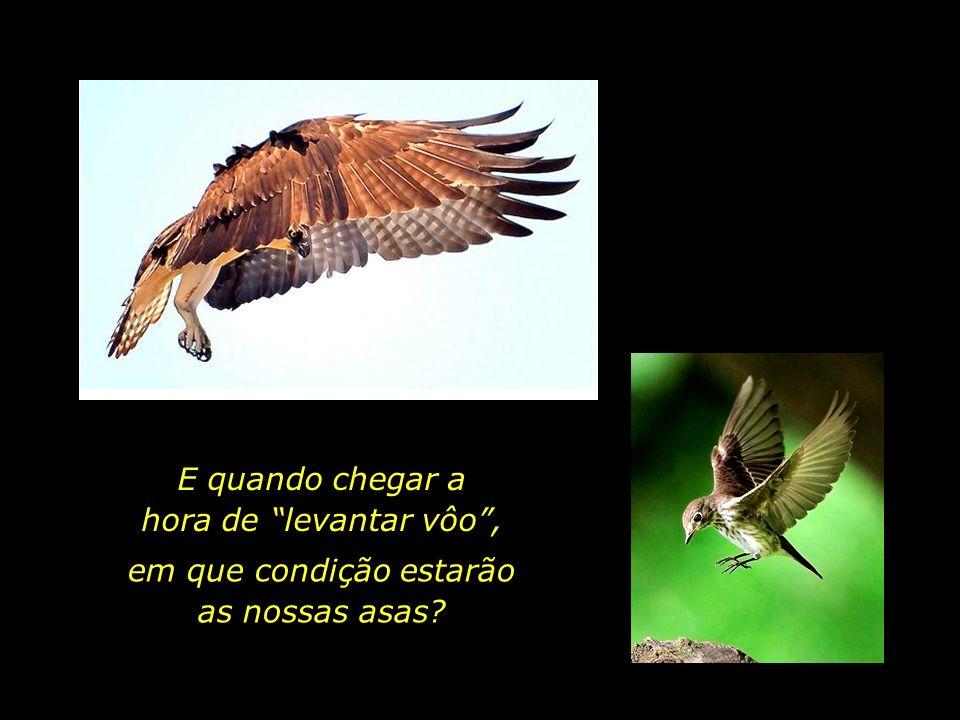 Um pássaro não voa o quanto quer, mas o quanto pode.