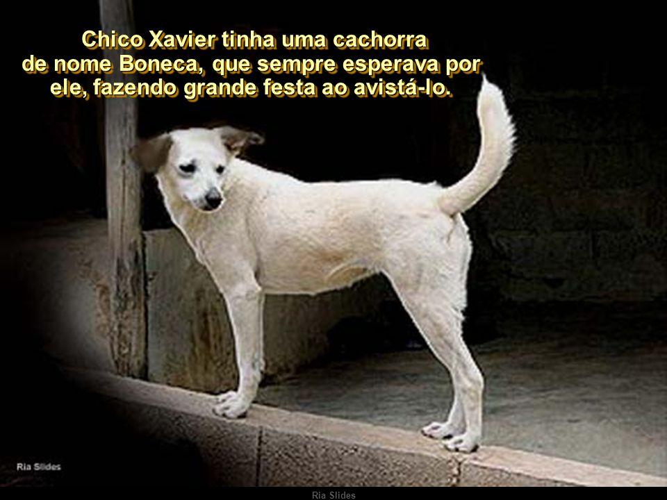 Ria Slides Autor do texto: Adelino da Silveira Autor do texto: Adelino da Silveira Boneca & Chico Xavier