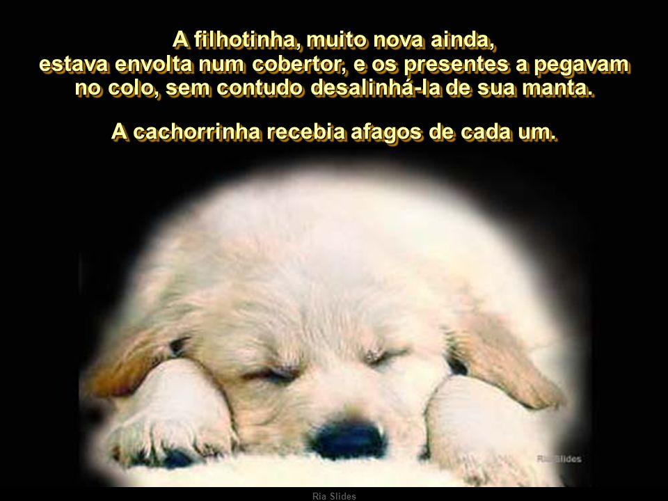 Ria Slides Um casal de amigos, que a tudo assistiu, na primeira visita de Chico a São Paulo, ofertou-lhe uma cachorrinha idêntica à sua saudosa Boneca