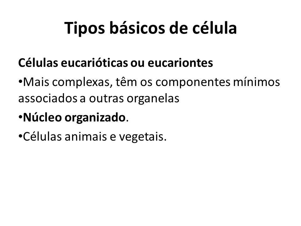 Células eucarióticas ou eucariontes Mais complexas, têm os componentes mínimos associados a outras organelas Núcleo organizado. Células animais e vege