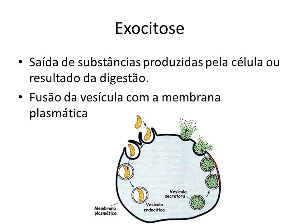 Exocitose Saída de substâncias produzidas pela célula ou resultado da digestão. Fusão da vesícula com a membrana plasmática