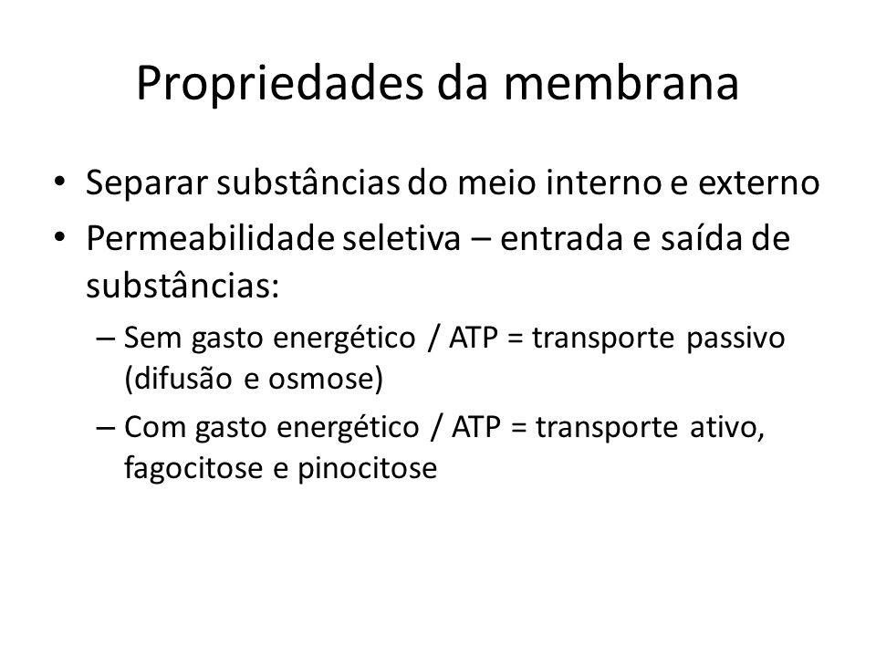 Difusão Não depende do consumo de energia (ATP) Depende do gradiente de concentração Local de sua maior concentração para o local de menor concentração.