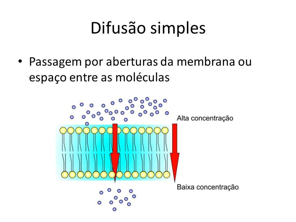 Difusão simples Passagem por aberturas da membrana ou espaço entre as moléculas