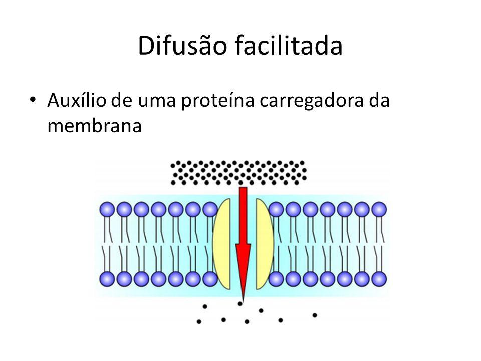 Difusão facilitada Auxílio de uma proteína carregadora da membrana