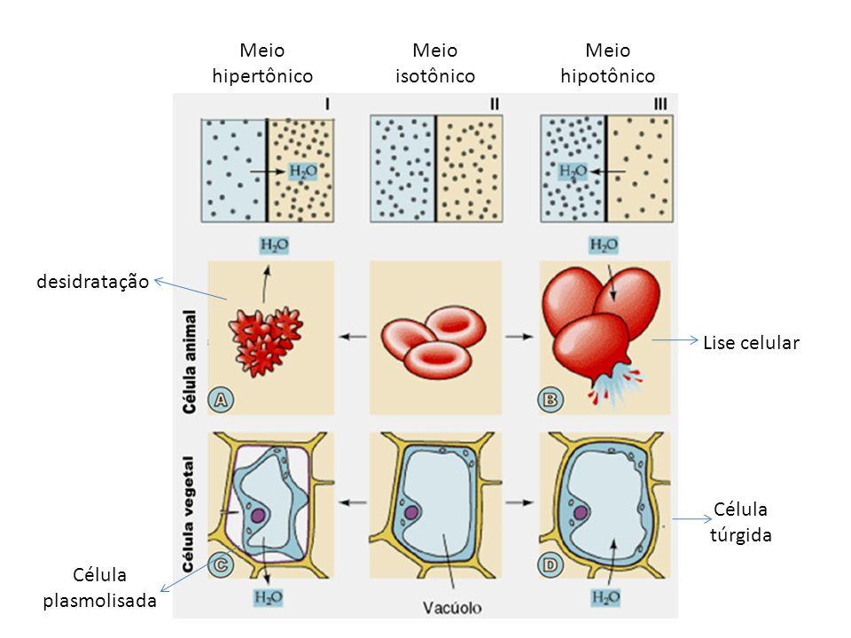 Transporte ativo As partículas atravessam a membrana, indo do local de menor concentração para o de maior concentração; Se movimentam contra o gradiente de concentrações, o que implica consumo de energia.