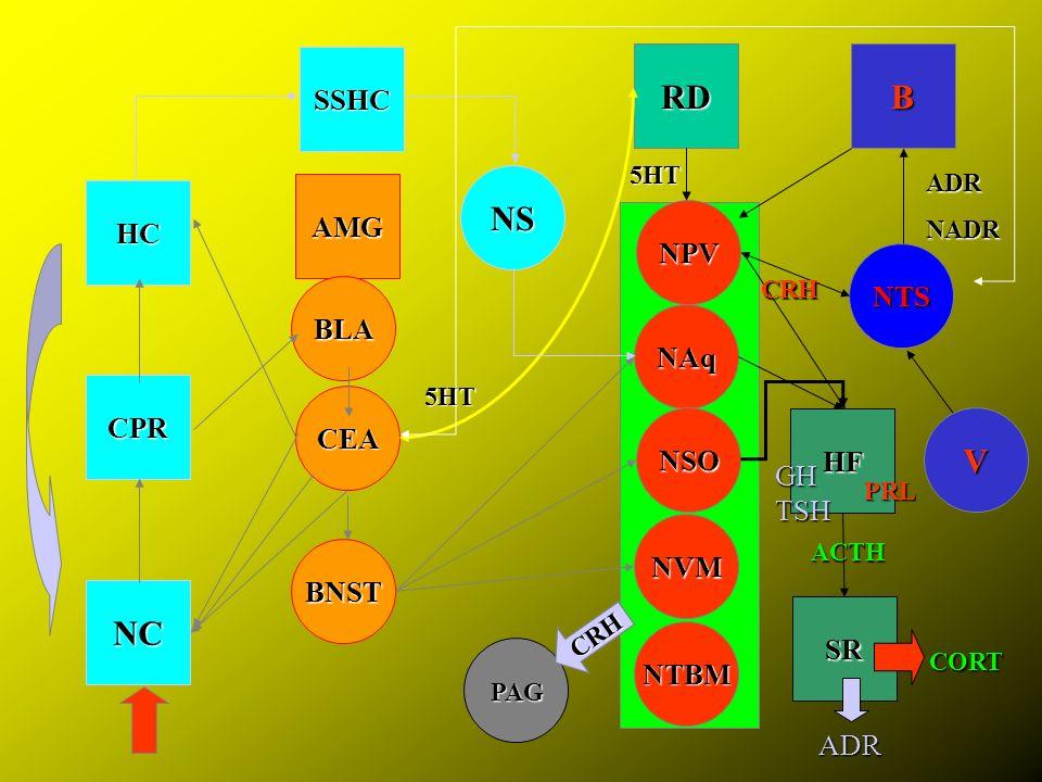 NC CPR HC AMG CEA BLA BNST NS RD NPV NAq NSO NVM NTS B HF SSHC 5HT ADRNADR SR NTBM PAG ACTH CRH PRL 5HT CORT V CRH TSH GH ADR